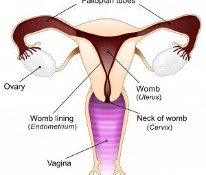 Infertility Treatment in Pimple Saudagar